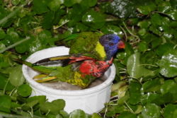 Lorikeet-sized birdbath displayed for close viewing inside a children's zoo