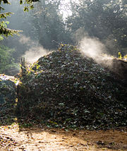 An active compost heap, steaming on a cold winter morning. The heap is kept warm by the exothermic action of the bacteria as they decompose the organic matter.