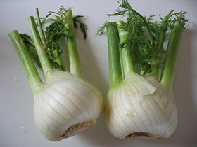 Florence fennel bulbs