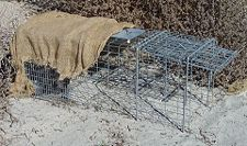 Cage trap with shade cloth to protect animal from heat.