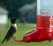 A hummingbird feeder with red nectar.