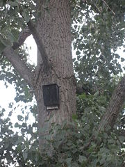 A typical bat house affixed to a tree trunk.